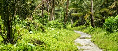 Jungle path to the local beach