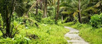 Jungle path to the local beach