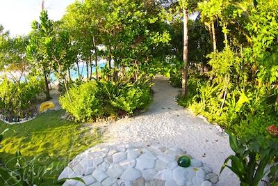 The gardens of TNR