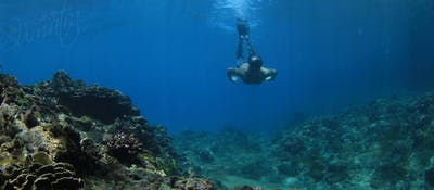 Exploring the local reefs