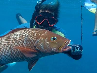 Complimentary spearfishing equipment