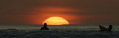 Asu at dusk