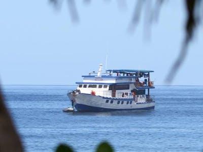 A familiar sight in the islands