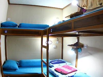 4 birth bunk