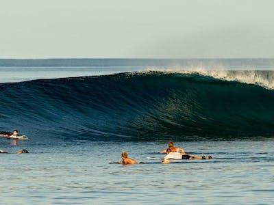 Mentawai gold