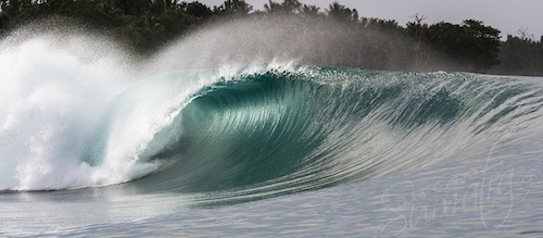 Green Bush Mentawai Islands