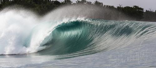 Green Bush Mentawai Islands
